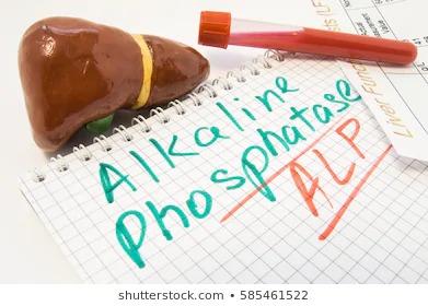 alkaline phosphatase چیست