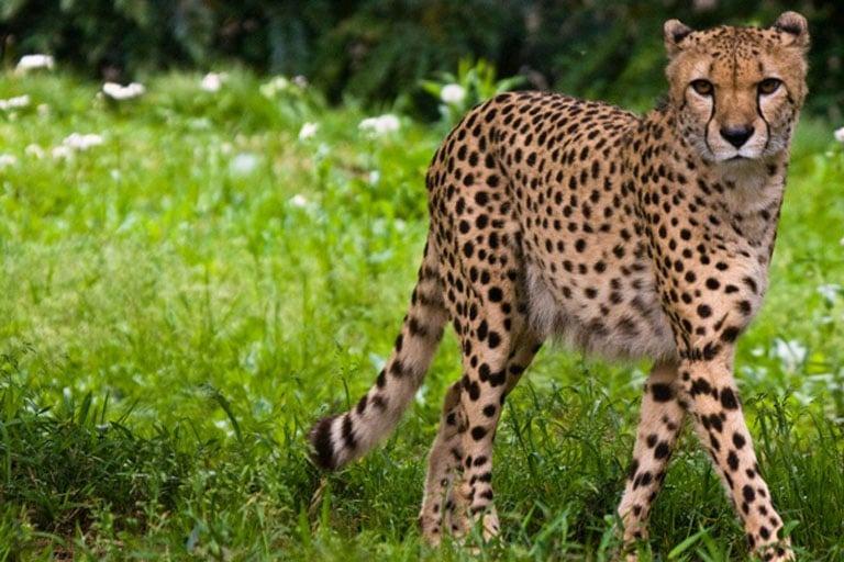 سریع ترین حیوان جهان